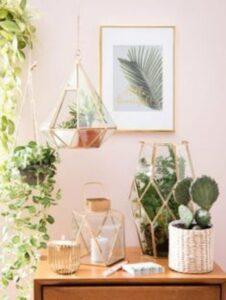 colt cu plane, vase de terarii din sticla, cactus matur in ghivezi de rafie, fundal deschis