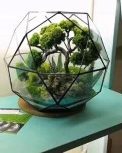 terariu din sticla cu bonsai si plante verzi, pervarz turcoaz