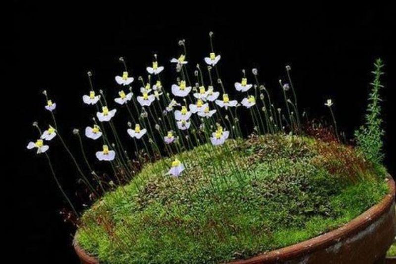 flori albe subtiri, muschi verde, ghiveri maro