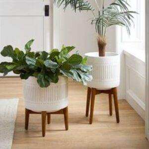 plante verzi in ghivece albe asemanatoare, scaune cu picioare din lemn, fundal luminos