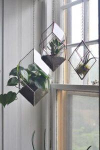 terarii din sticla cu plante, agatate langa geam