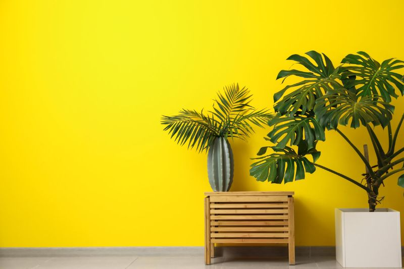 Plante exotice, ghiveci alb, perete galben
