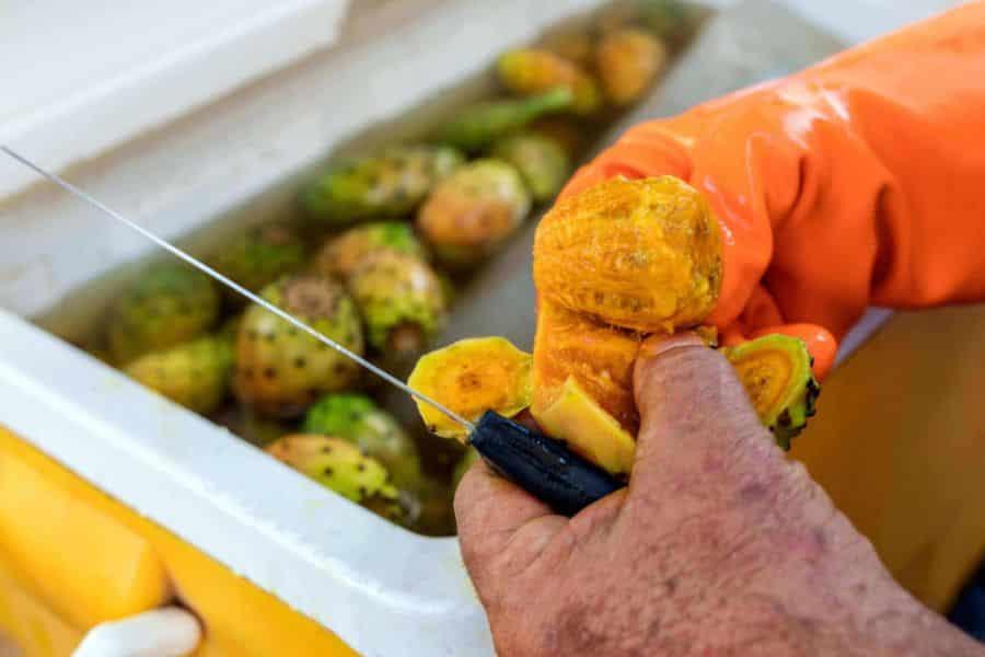 Fruct de puntia ficus indica portocaliu, taiat pentru a fi explorat