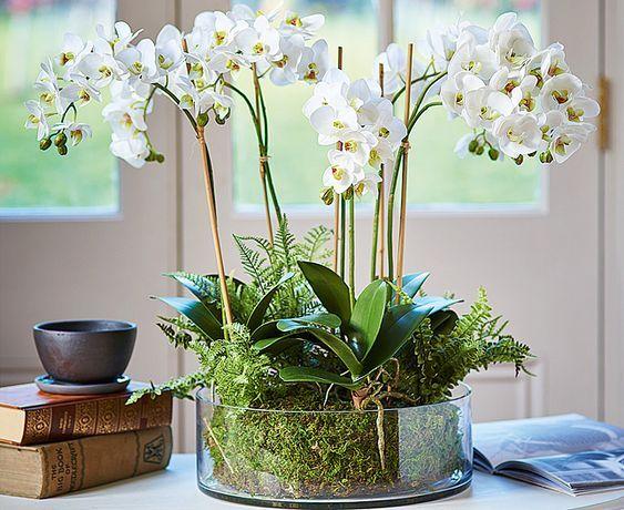 Familie de Orhidee pitice cu flori albe, carti vechi, birou modern
