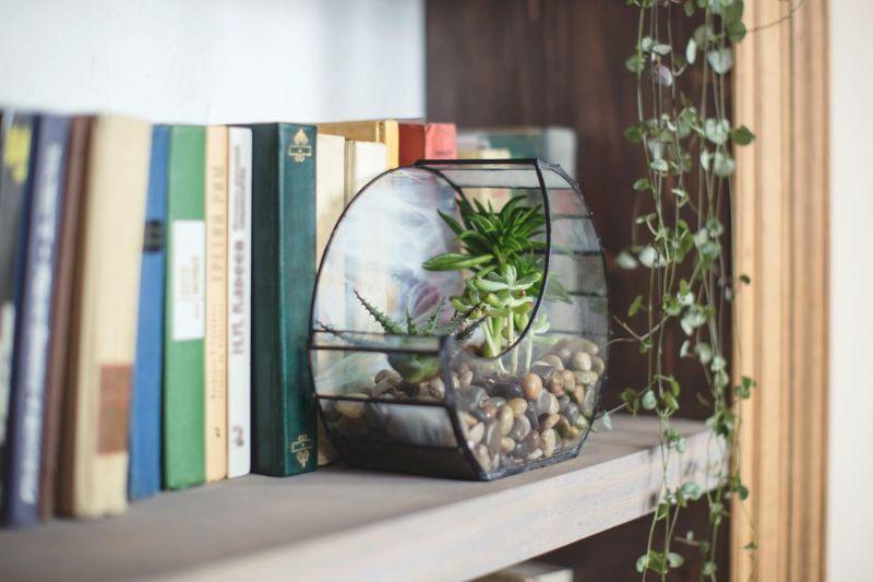 plante suculente intr-un vas geometric, carti pe etajera