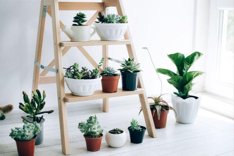 plante versi si suculente, suport de lemn, came3ra luminoasa
