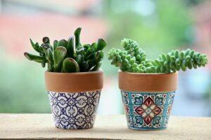 Plante suculente verzi, in ghivece cu motive florale, fundal de natura