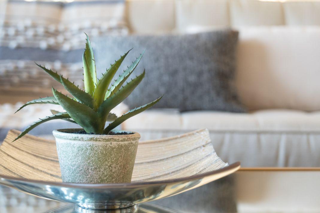 Aloe vera pe un bol de stica, fundal cu o canapea