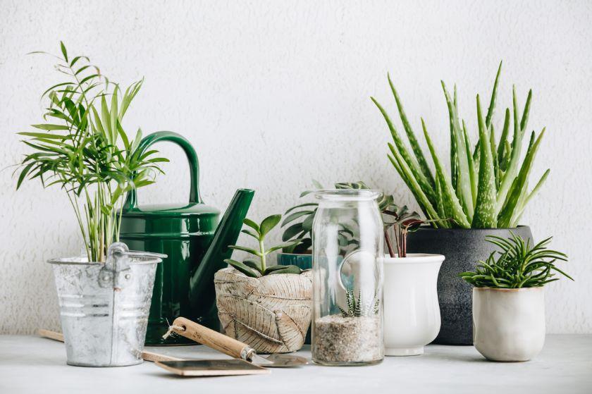 Plante verzi in ghivece de tabla si ceramica, fundal deschis, verde, gri, crem