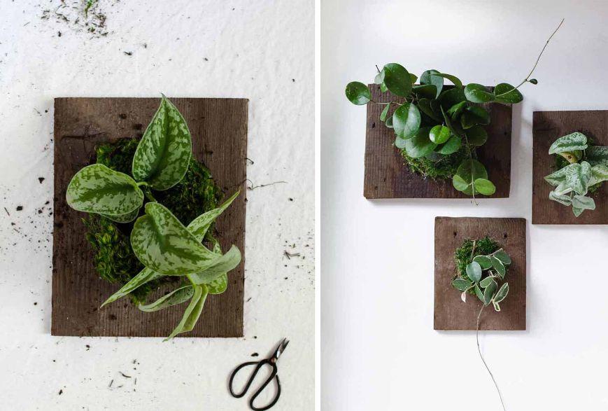 Plante verzi in taboluri din lemn, perete alb