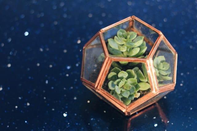 dodecaedru geometric cu plante verzi, masa albastra cu picatele albe