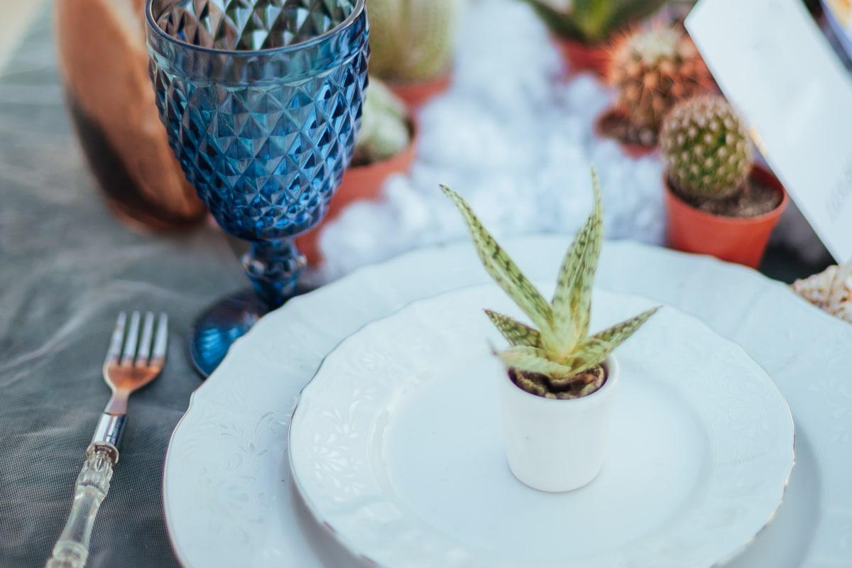 planta aloe vera pentru marturii de nunta, farfurii albe, pahare din cristal albastru