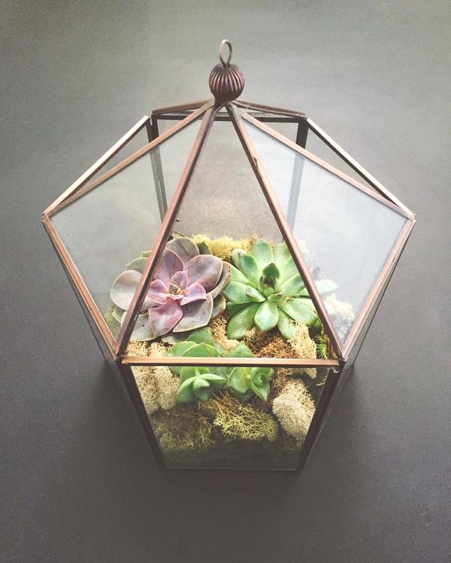 filigorie din sticla formata din profile de alama, cu plante suculente si muschi natur