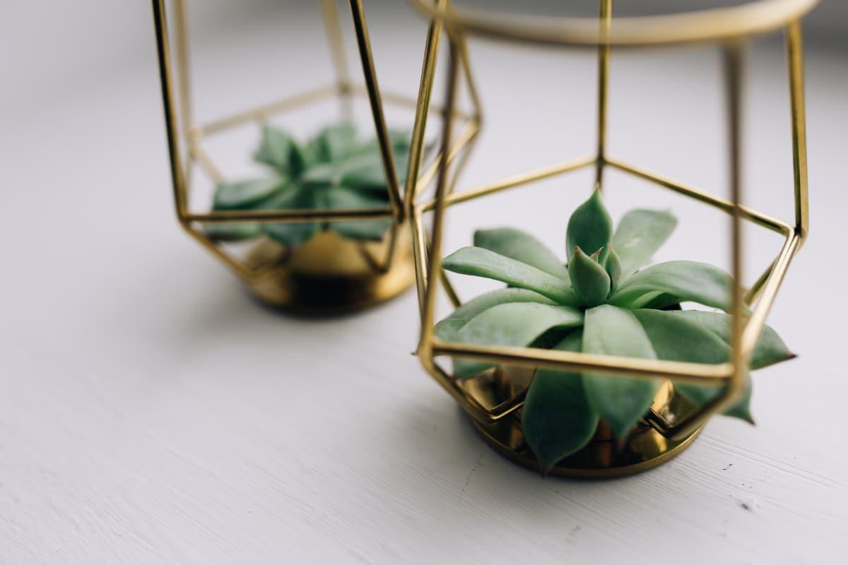 plante suculente in forme din metal vopsit auriu, fundal alb