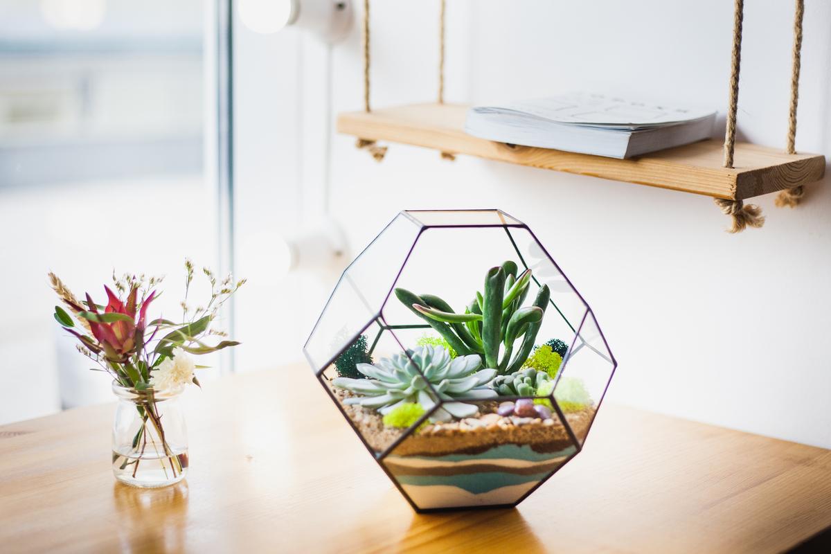 plante suculente intr-un terariu geometric din sticla, nisip valurit in culorile marii, polita din lemn cu o carte pe ea