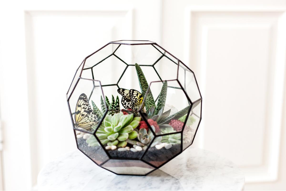 Terariu din sticla format din pentagoane, cu plante suculente, fluturi artificiali, muschi rosu