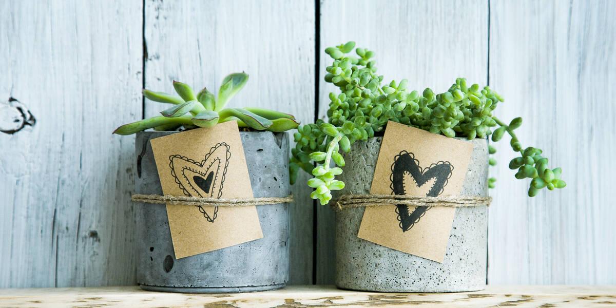marturii de nunta sub forma de ghivechi gri cu plante suculente, perete turcoaz