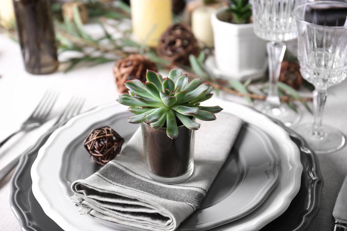 Planta suculenta intr-un pahar transparent, pe un servet de masa aranjat pentru un eveniment