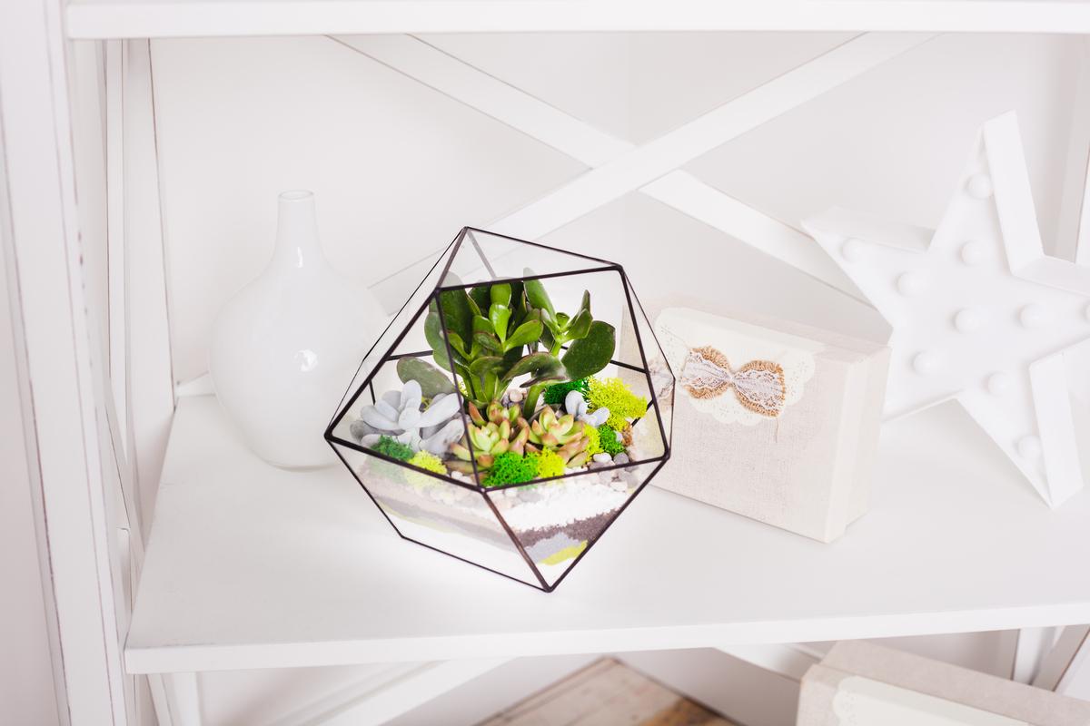 Terariu geometric din sticla, cu plante suculente si muschi colorati