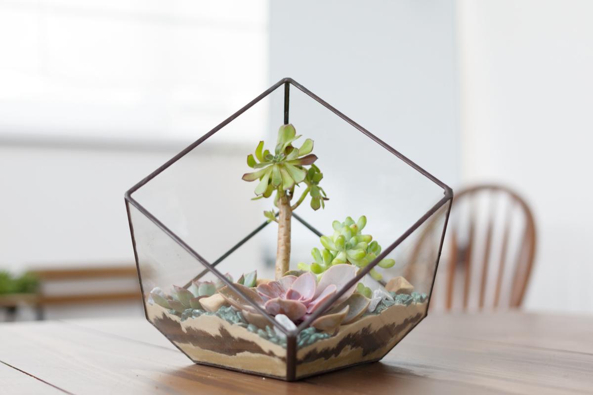 Terariu cu plante suculente intr-o forma geometrica de sticla, masa din lemn, nisip crem, pietre turcoaz