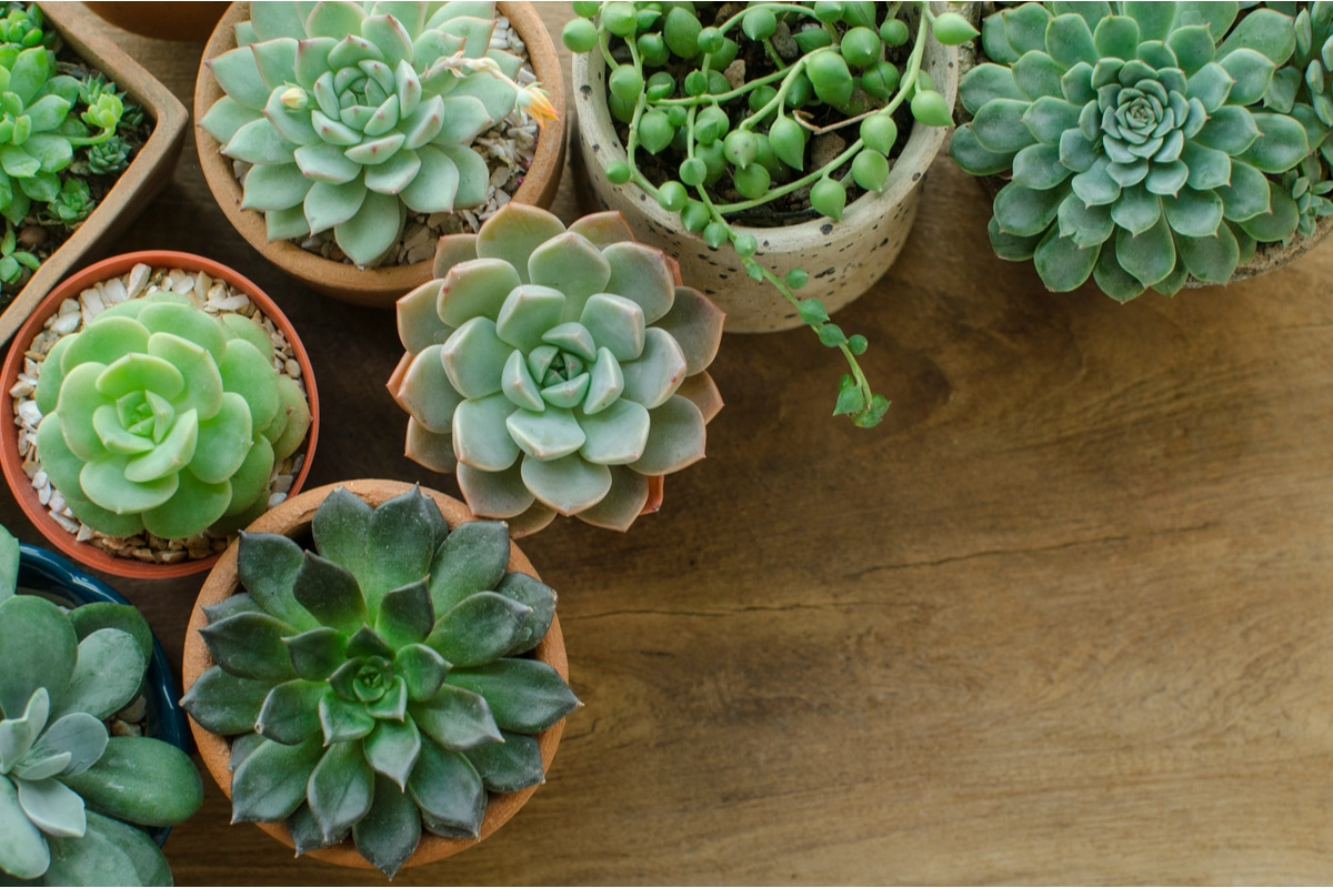 plante suculente in ghivece de diferite tipuri, puse una langa cealalta pe o sala maro