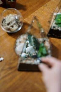 detaliu dintr-un terariu cu cactusi, bolui de sticla, masa de lemn