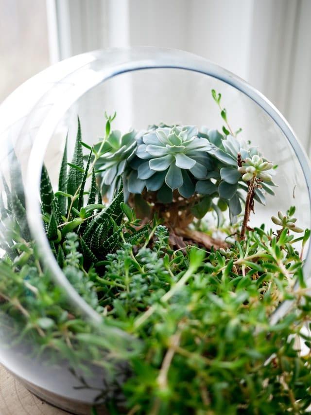 bol de sti, cla cu plante vii si verzi, decor de casa deschis