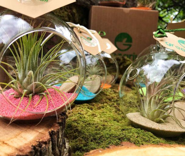 Glob din sticla cu o planta aeriana, pentru marturie de nunta sau botez, fundal de natura