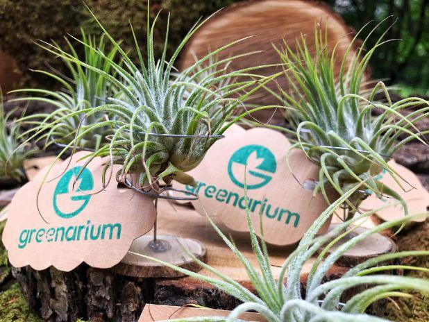 set de marturii cu plante aeriene verzi, norisori cu mesaj personalizat