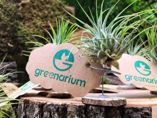 PLanta aeriana pe o felie de lemn, logo greenarium pe un norisor din hartie